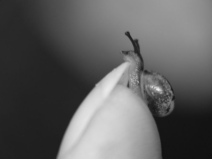 Close-up side view of snail on blurred plant