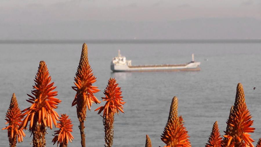 Close-up of plants by sea against sky