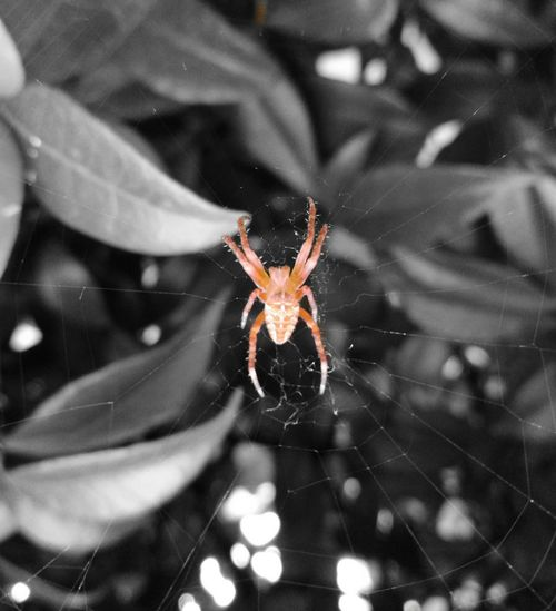 Spiderworld Spider Nature_collection Eyenaturelover Spider