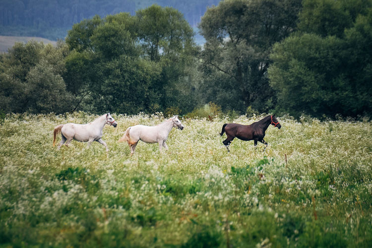 Horses On Field Against Trees