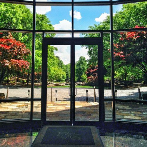 Door Window Lush