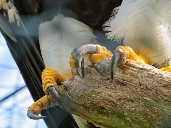 Cropped image of sea eagle perching on wood