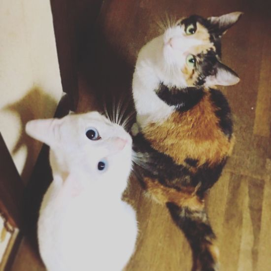 Animals Neko Cats Manekineko Cat Cat♡ Gatto Gatti