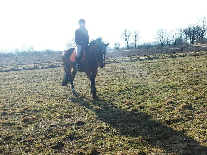 Etna ❤*horse Horse Riding Sport Loveit Me That's Me Beutiful  horse 💜💜 Check This Out Winter