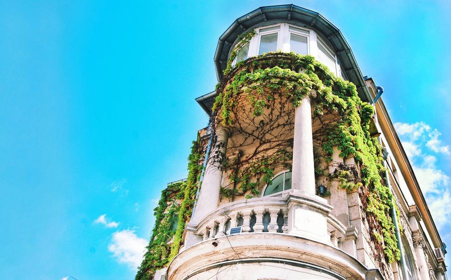 Architecture Building Exterior Blue Outdoors No People Day Sky Low Angle View Built Structure Art Is Everywhere Details Sun Colored Colorful Bucharest Close-up Shadows & Lights Details Textures And Shapes Green City House Balcony Plant Plants And Flowers Green Wall The Architect - 2017 EyeEm Awards The Street Photographer - 2017 EyeEm Awards