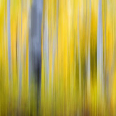 Motion blur on the trees Blur Utah Aspen Mountains