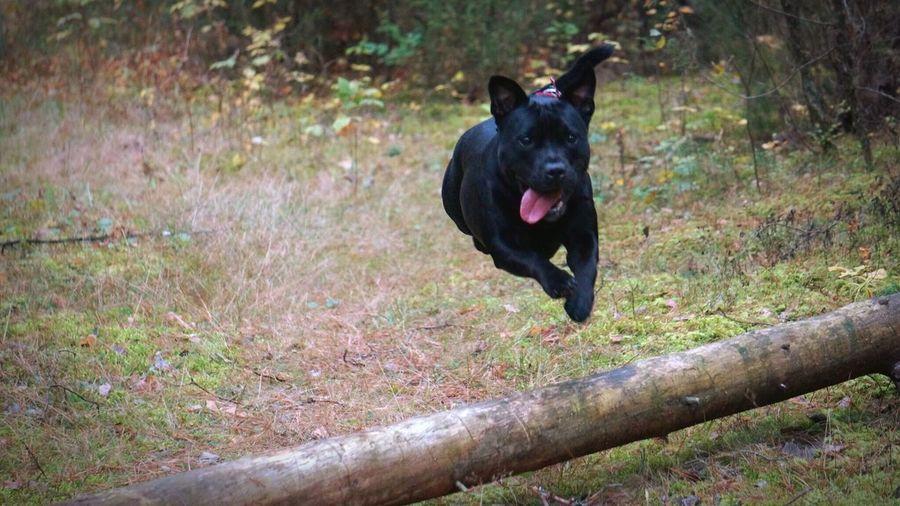 Flying Dog Stuffy