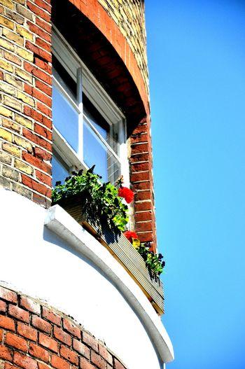 Window View Holborn London_only EyeEm Streetart Suny Day ☀️