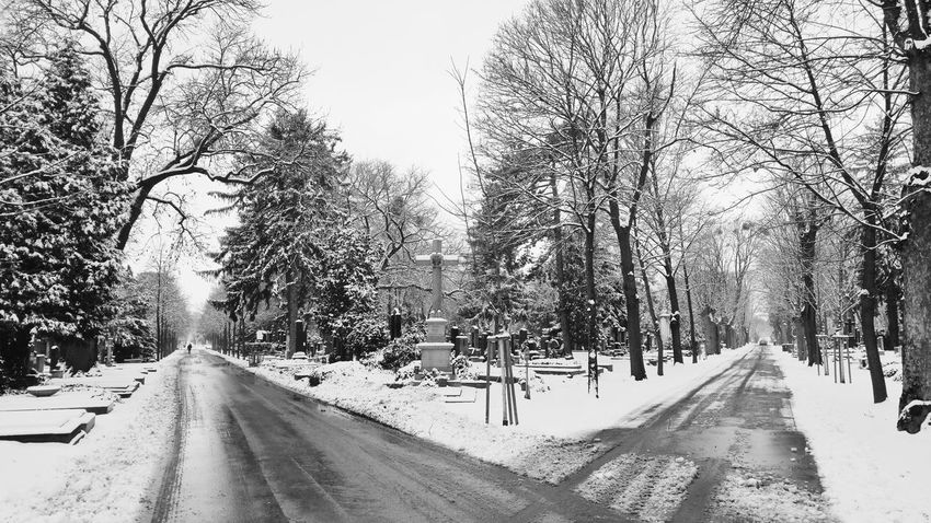 Complex decision-making part II Forest Empty Road Junction Vienna Wien Explorevienna Igersvienna Visitvienna Visitaustria Blackandwhite Austria Bnw Streetlife Streetphoto_bw Streetphotography_bw Everybodystreet Bnw_vienna The Way Forward Snow Tree Winter Cold Temperature Nature Outdoors Day Road No People Sky Beauty In Nature