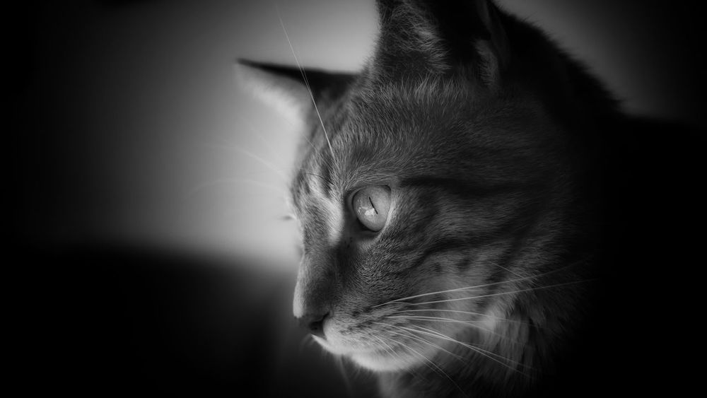 My little Tiger. 😊 Close-up Indoors  Animal Themes Cat Cat Lovers Cats Of EyeEm Cat Eyes Blackandwhite Photography Edited Taking Photos Mystyle Fuji Fujifilm Catportrait