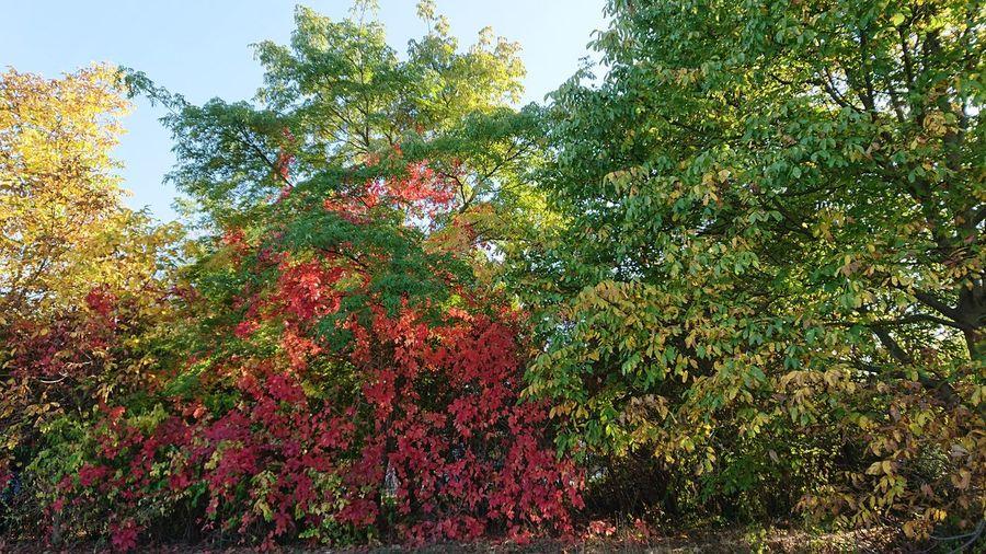 Herbst Tree
