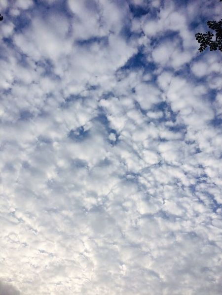 Clouds And Sky Check This Out Taking Photos Hello World Friends Taking Photos I Love It ❤ Wow *-* Sunsets_capture Enjoying Life My Photography. Flower _ Collection. Nature _ Collection Simple Things In Life. Nature Around You. Natural Beauty. Cycle Of Life
