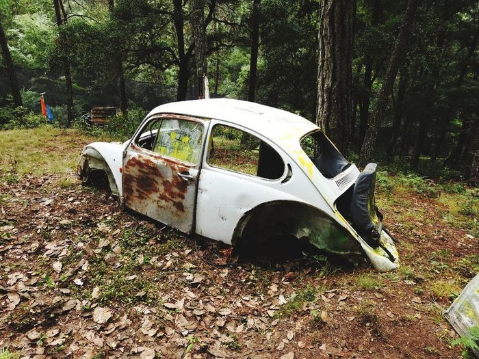 #photography #travelphotography Paintball #paintballphotography Tree Car Damaged Destruction Deterioration Abandoned Ruined Obsolete Bad Condition