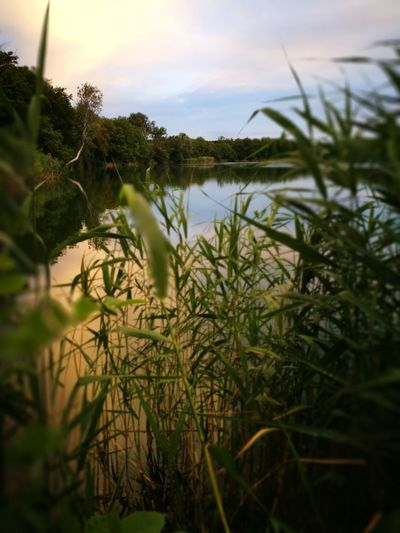 Nature Plant Growth No People Grass Outdoors Landscape Tree Water Scenics Day Sky Beauty In Nature Close-up