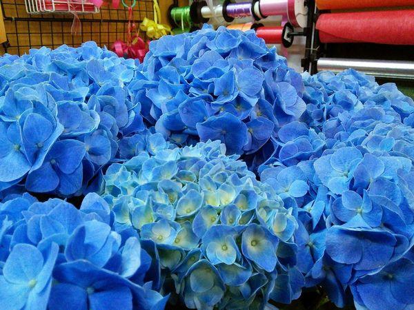 blue紫陽花 Flowerporn Flowers Flower Flowers Cute♡ Blue EyeEm Flower EyeEmbestshots