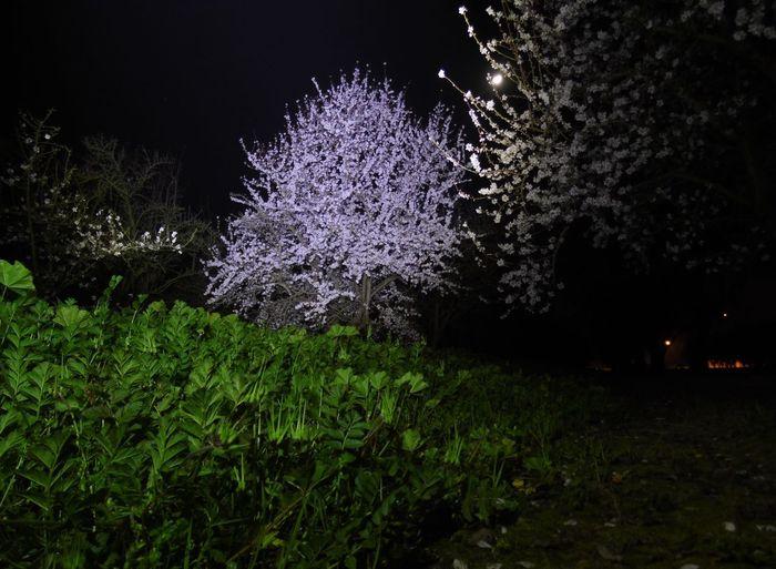 Night blooms...