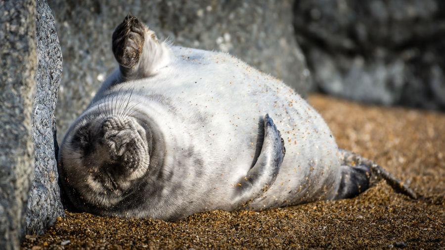 Close-up of animal lying on rock