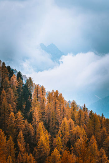 Check out my prints at http://simonmigaj.com/shop/ and visit my IG http://www.instagram.com/simonmigaj for more inspirational photography from around the world. Tree Plant Cloud - Sky Forest Scenics - Nature No People Mountain Beauty In Nature Tranquil Scene Nature Tranquility Sky Autumn Land Day Non-urban Scene Change Environment Growth Outdoors WoodLand Pine Tree Coniferous Tree Mountain Peak Pine Woodland