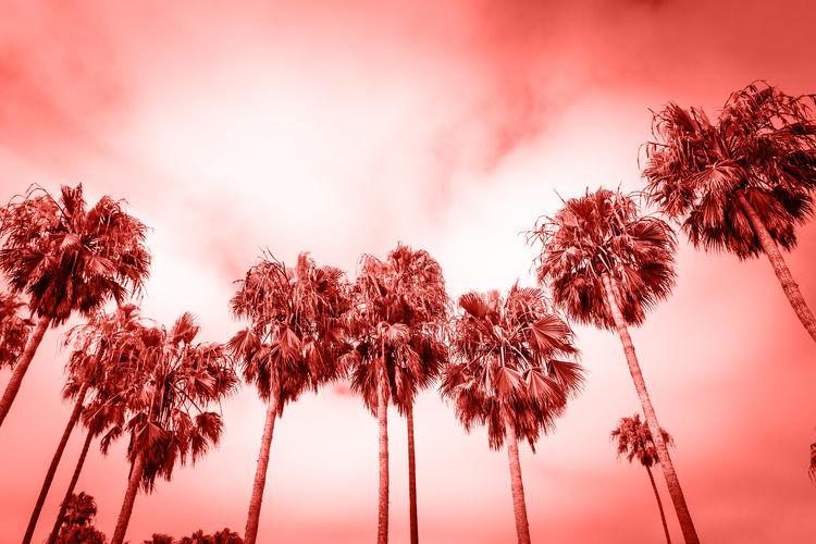 Palms of Venice