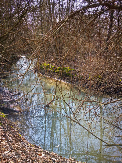Resurgences Upper Course Of Sile River Sile Park Treviso Italy Travel Photography Travel Traveling Nature Water Springs Slowly Flowing Water Bare Trees Dressing Up With Spring Buds Mobile Photography Art Fineart Backlight Reflections And Shadows Mobile Editing