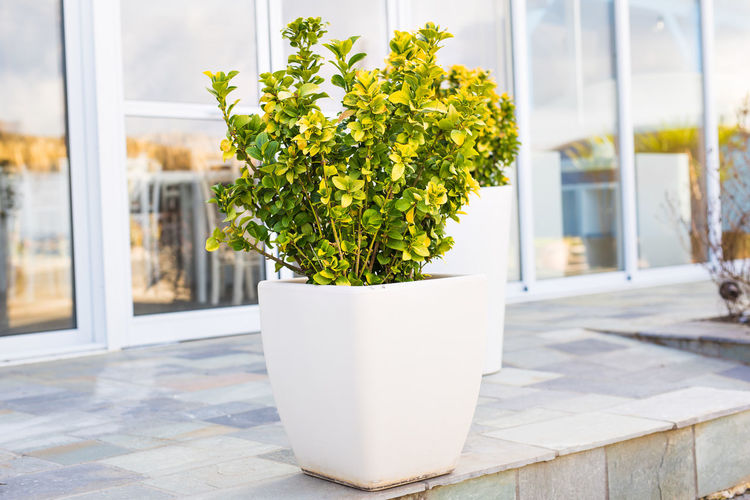 Close-up of potted plant on table by window