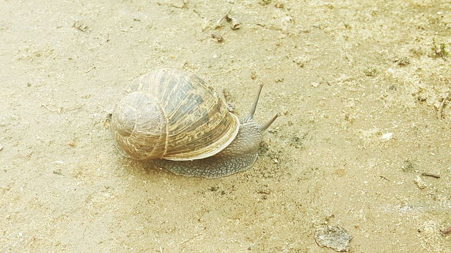 Sand High Angle View Nature Backgrounds Animals In The Wild No People Sea Life Sea Animal Wildlife Beach Beauty In Nature Close-up Water Outdoors Animal Themes Living Organism Day UnderSea First Eyeem Photo