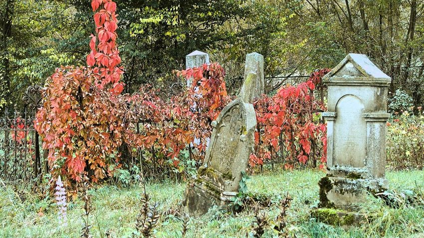 Autumn Autumn colors Cemetery Cemetery Photography Architecture Beauty In Nature Building Exterior Built Structure Day Grass Gravestone Growth Nature No People Outdoors Tombstones Tree Water