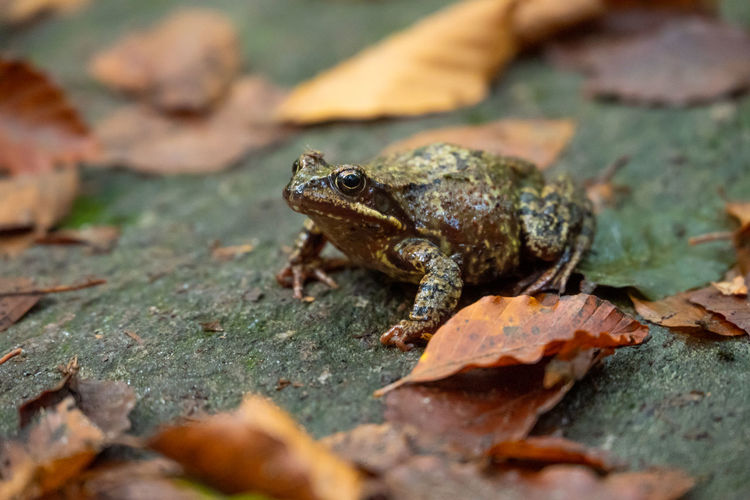 Close-up of frog on leaves