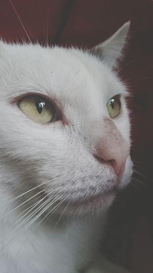 Cat Kittycat White Cat Ilovecats Iloveher Taking Photos