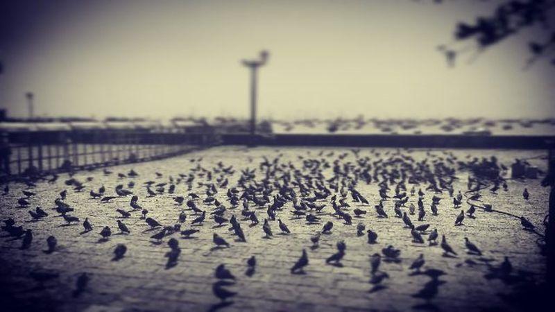 Pigeon Pigeons Mumbai Birds Northindia India Indiatravel Instagram Picoftheday Incredibleindia Southindia Tour Kannada World Instapic Lifeisgood Cloudstagram Landscape Photography Nikon Shot Amazing Captures Herewego ASIA lovely lovelyday streetlife nature natgeotravelpic
