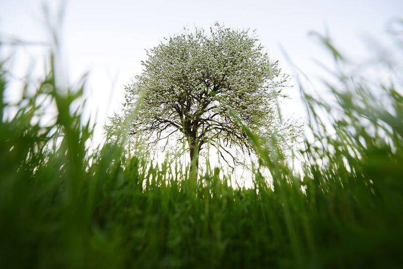 spring Green My