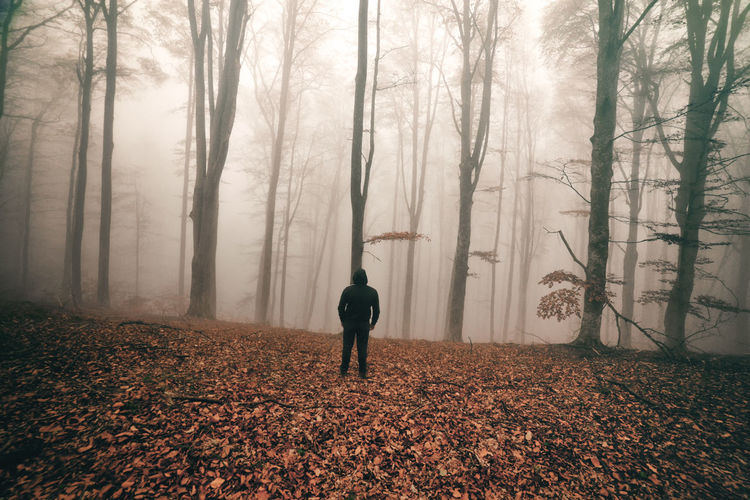 Rear View Of Man Standing On Leaves Covered Forest During Foggy Weather