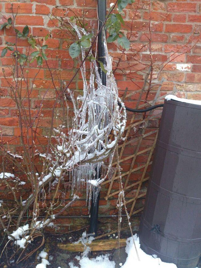 Lee Brockhurst Icy Blast