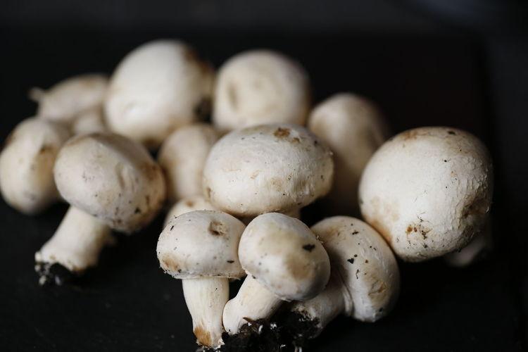 Dedochef Fungus
