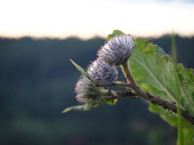 Agrimony Flower Nature Day Flower Head Bur