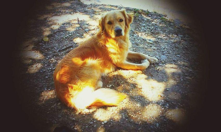 Dog One Animal Pets Day Croatia