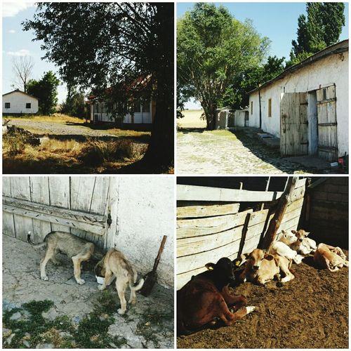 Ahmetli köy hayatı..