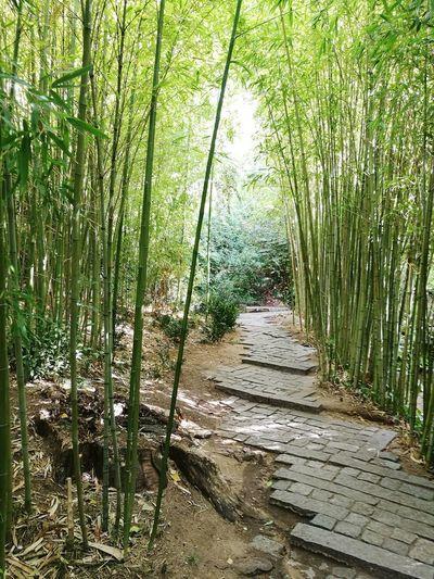 pathway between