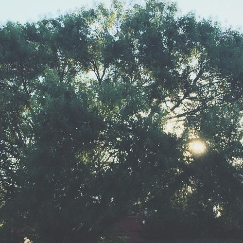 Check This Out Hello World Hi! Trees Sunlight Blue Sky Nature In Town City Satx