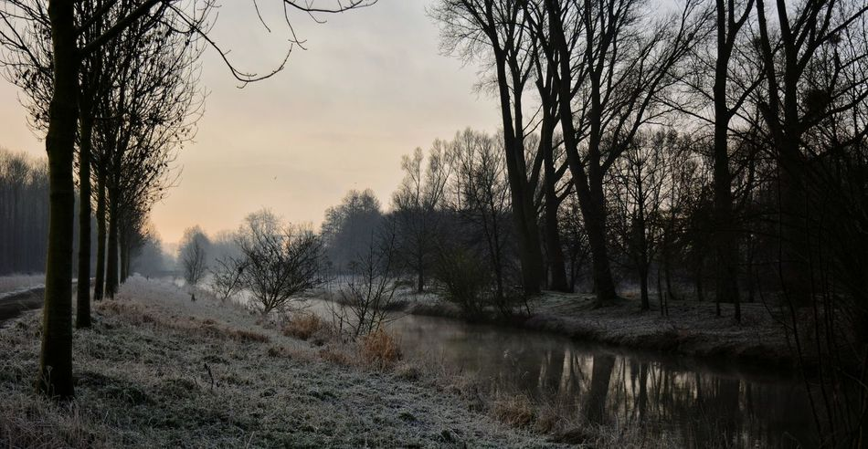 Sunrise Light And Shadow Nikon D5200 Eye4photography  Hanging Out Frosty Morning Cold Spring Nature Litle River EyeEm Nature Lover Showcase March Trees EyeEm Sillouette NRW Sky And Clouds Eyem Gallery Taking Photos Nikonphotography