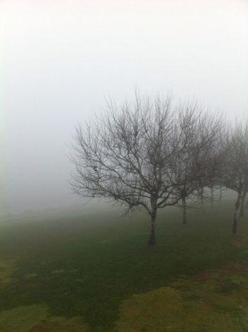 #boira #fog