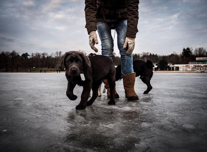 Low section of woman with puppies on frozen river