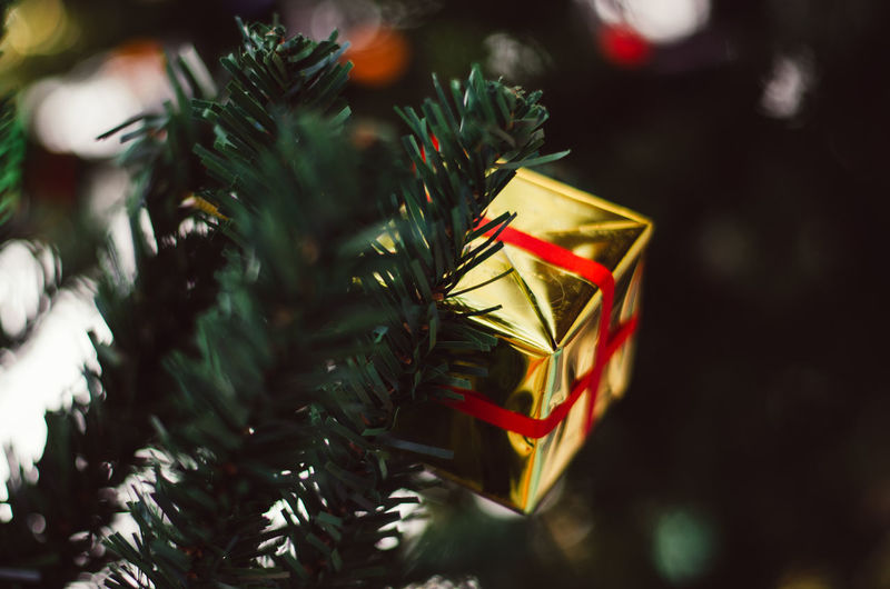 gift box of Christmas background Gift Box Box Box - Container Celebration Celebration Event Christmas Christmas Decoration Christmas Ornament christmas tree Close-up Decoration Focus On Foreground Gift Gift Box Holiday Holiday - Event Indoors  No People Plant Selective Focus Tree