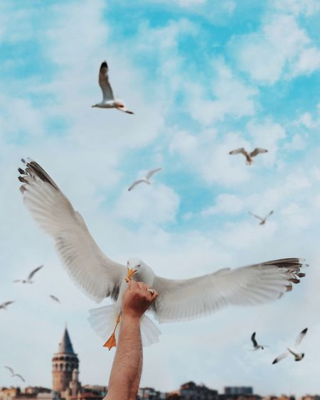 Low Angle View Of Hand Feeding Seagull Flying Against Sky