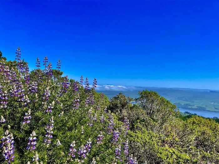 Flowering plants by trees against blue sky