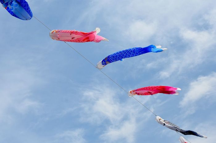鯉のぼり 端午の節句 Lookingup Carp Carp Streamer Japanese Culture Sky Sky And Clouds Skyporn Sky_collection Skylovers Warking Around お散歩Photo 板櫃川で。鯉のぼりが空を沢山泳いでた🎏🎏🎏🎏🎏