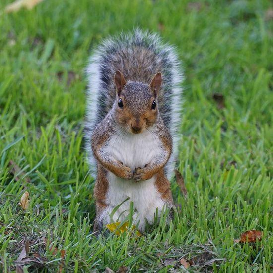Portrait of squirrel on grass