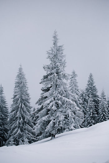 Landscape_Collection Nature Pine Winter Beauty In Nature Cold Temperature Day Frozen Landscape Mountain Nature Nature_collection No People Outdoors Pine Tree Scenics Sky Snow Snow Covered Snow Covered Trees Spruce Tree Tranquil Scene Tranquility Tree Winter