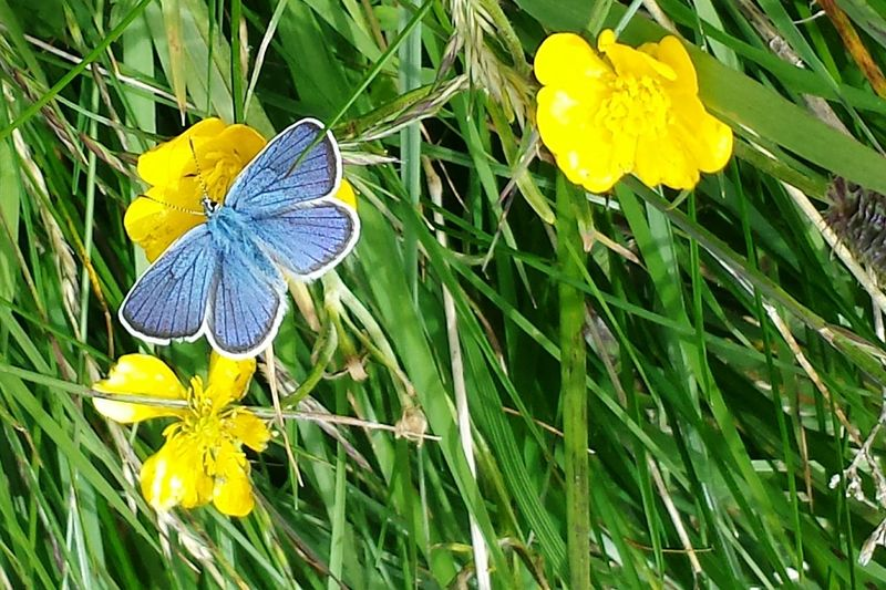 Butterfly Blue Colours Flying Nature Holidays Moments Mountains Trekking Walking Around ortisei