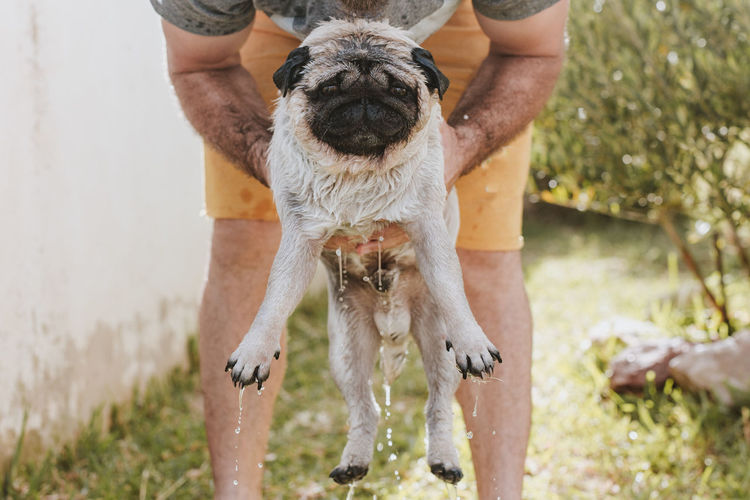 Midsection of man holding wet dog while standing in yard